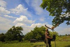 Fauconnier avec le cherrug de falco de faucon. Photos libres de droits
