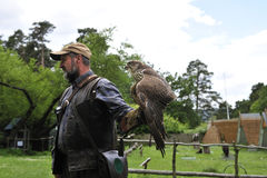 Fauconnier avec le faucon, cherrug de falco. photo libre de droits
