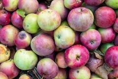 Faule Äpfel Stockfotos