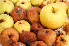 Faule Äpfel lizenzfreies stockbild