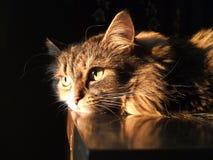Faule ein Sonnenbad nehmende Katze lizenzfreies stockfoto