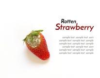 Faule Erdbeere lokalisiert Lizenzfreies Stockfoto