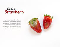 Faule Erdbeere lokalisiert auf weißem Hintergrund Stockbild