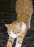 Faule Katze Stockfotos