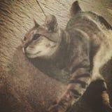 Faule Katze Lizenzfreies Stockbild