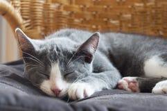 Faule Katze Lizenzfreie Stockfotos