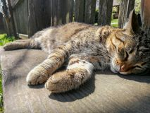 Faule Katze auf einer Bank lizenzfreies stockbild