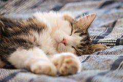 Faule Katze der getigerten Katze, die auf blauer Bettabdeckung stillsteht Stockbilder
