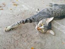 Faule Katze der getigerten Katze auf dem Boden Lizenzfreies Stockbild