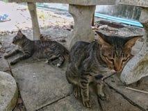 Faule Katze der getigerten Katze auf dem Boden Stockfotografie