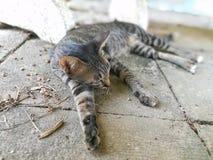 Faule Katze der getigerten Katze auf dem Boden Stockfotos