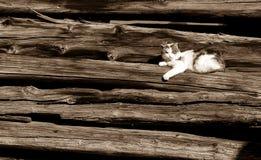 Faule Katze, die auf Bauholz liegt Lizenzfreie Stockfotografie