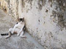 Faule Katze, die durch das Kloster in Kreta kühlt Lizenzfreie Stockbilder