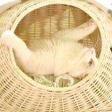 Faule Katze, die in ihrem Bett spielt Stockfotografie