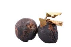Faule Äpfel mit trockenen Blättern Stockfoto