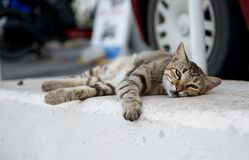Faule schläfrige Katze, die draußen auf Tageszeit, stillstehende Katze, faule Katze, lustige Katze, schläfrige Katze, Siestazeit, Stockfoto