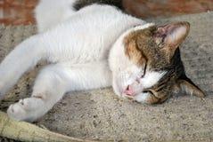 Faule Schlafenkatze Stockfotografie