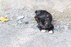 Faule schwarze Katze legen auf konkreten Boden im Freien unter Sonnenlicht Stockbild
