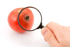 Faule Tomate. Lizenzfreies Stockbild
