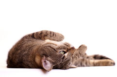 Faule träumende Katze Stockbilder