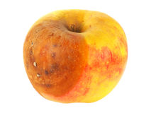 Fauler Apfel Lizenzfreies Stockfoto