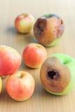 Fauler Apfel und frischer Apfel Lizenzfreies Stockfoto