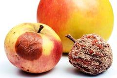 Fauler Apfel und frischer Apfel lokalisiert auf weißem Hintergrund Stockfotos