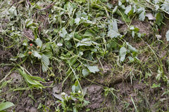 Fauler Grasabfall Stockbild