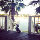Fauler Hund bewundert die Ansicht Stockfoto
