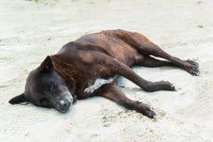 Fauler Hundeschlaf auf Sandstrand Stockfoto