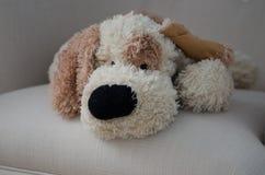 Fauler Hundeteddybär Stockfoto