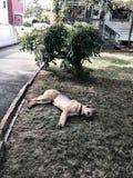 Fauler Schäferhund Stockbild