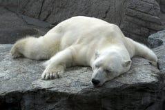 Fauler schlafender Eisbär Stockbilder