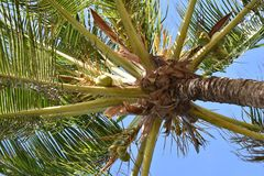 Fauler Tag unter der Palme Stockbilder