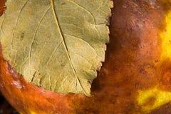 Faules Gelb mit einem braunen Apfel mit einem Blattmakro Lizenzfreie Stockfotos
