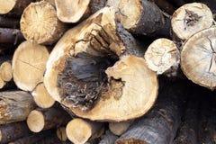 Faules Holz Baumaterialien der schlechten Zustandes Lizenzfreie Stockfotografie