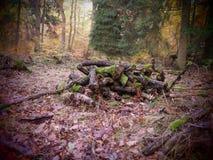 Faules Holz in einem wilden und romantischen forrest lizenzfreies stockbild