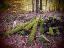 Faules Holz in einem wilden und romantischen forrest lizenzfreie stockfotografie