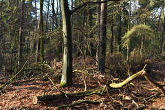 Faules Holz in einem Winterwald Lizenzfreie Stockbilder