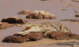 Faules Krokodil stockbild