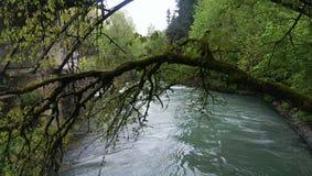 Faulous drzewo, rzeka, bajka, ТуР¼ аР½, mech, natura, las, Abchazia, Ð ² Ð ¾ Ð'а, Ð ¾ зÐΜрР¾ Zdjęcia Stock