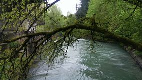 Faulous tree, River, tale,Туман, moss, nature, forest, Abchazia,вода,озеро Stock Photos