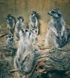fauna Imagenes de archivo
