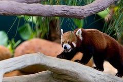 Fauna Imagen de archivo