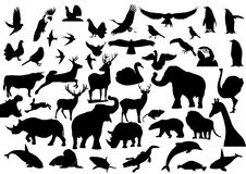 Fauna vector illustration