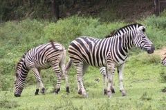 Fauna Lizenzfreies Stockfoto