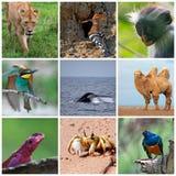 fauna Fotos de archivo