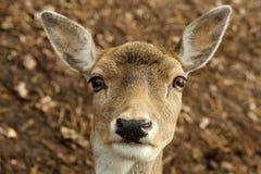 fauna Royalty-vrije Stock Foto's