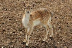 fauna Stock Foto's