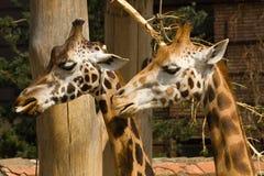 fauna Stock Fotografie